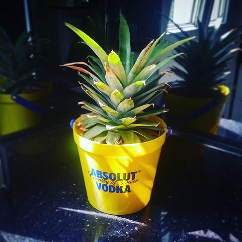 DIY ananas